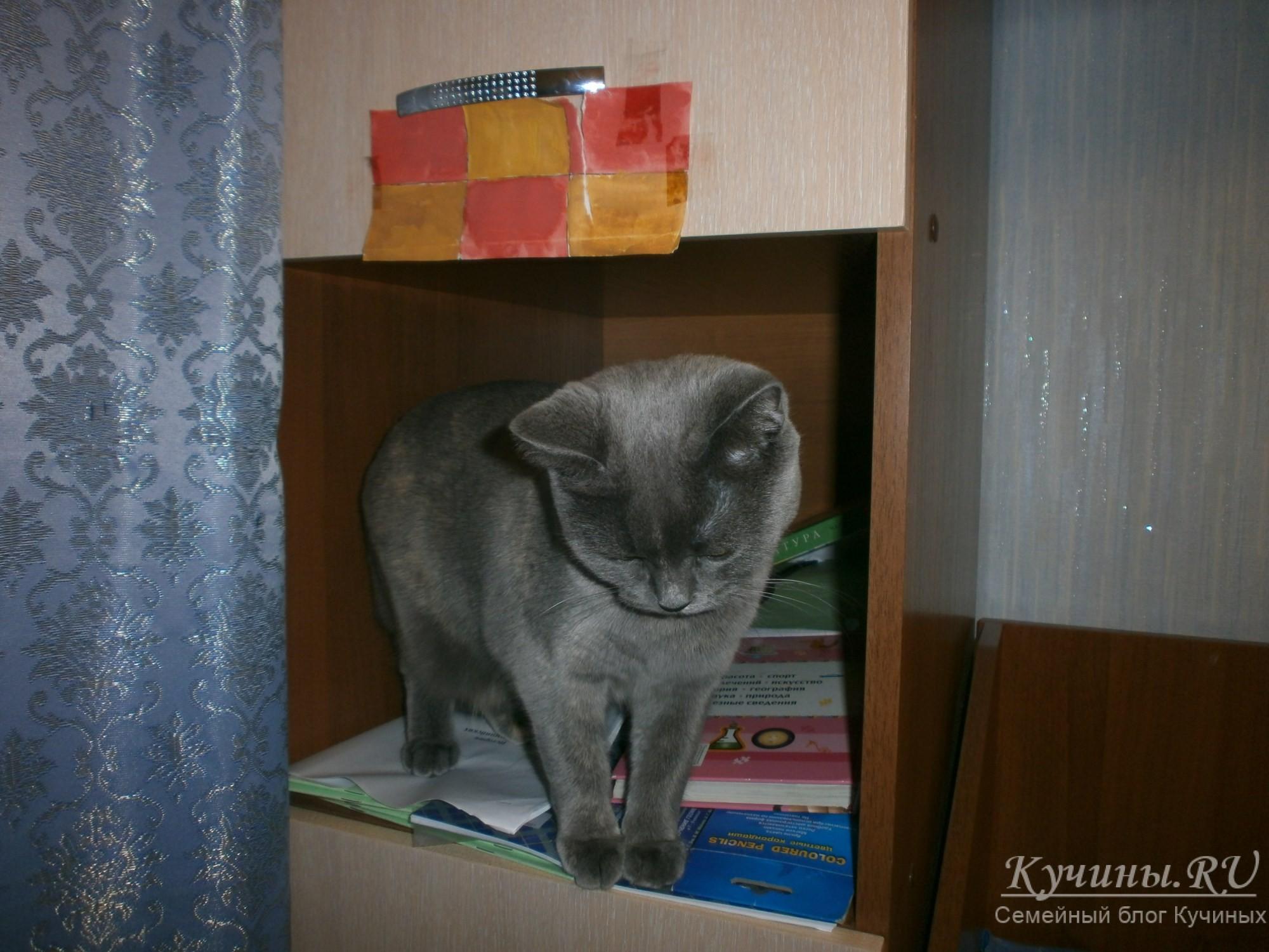 А что это у Алены в шкафу творится?